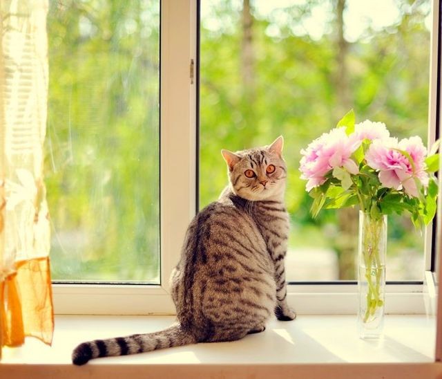 У кота блохи – что делать, как избавится от паразитов?