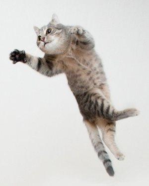 Ацикловир для кошек - инструкция по применению, дозировка