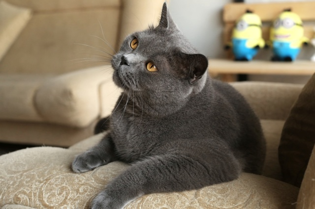 Ухо кошки - строение, анатомия, фото