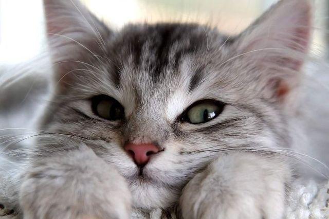 7 причин почему кошки мурлыкают когда их гладишь