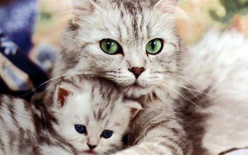 Средство от глистов для кошек - какое лекарство лучше