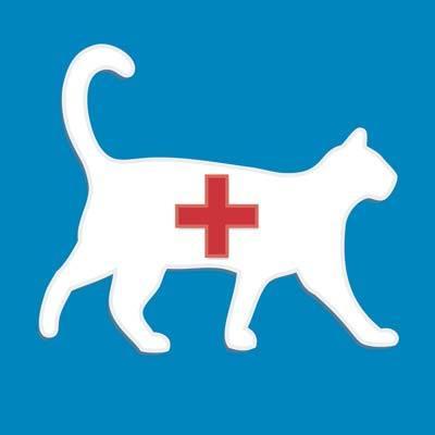 7 причин воспаления матки у кошки - симптомы, лечение, операция, профилактика