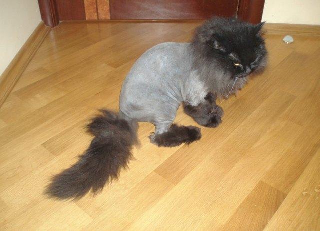 Как подстричь кота самому в домашних условиях?