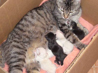 Как понять что кошка родила всех котят - 6 признаков окончания родов