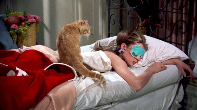Как заставить кота спать ночью
