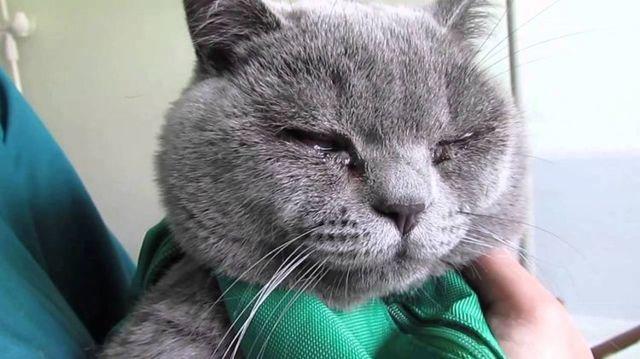 Ципровет для кошек - инструкция по применению глазных капель