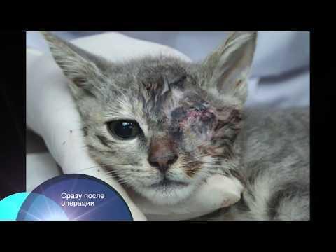 Удаление глаза у кошки - виды операций