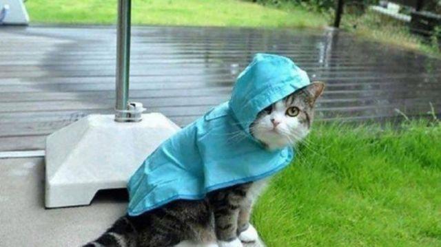 Как понять, что у кота температура - 5 причин температуры