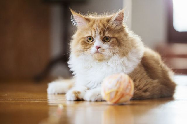 Машинка для стрижки кошек - как выбрать и уход