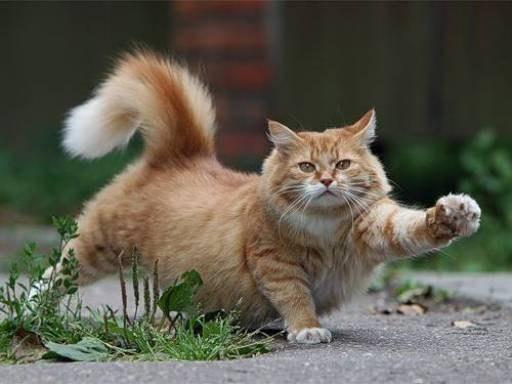 Как отучить кота мяукать - эффективные методы