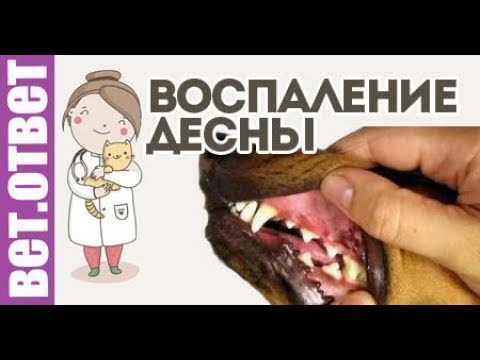 Стомадин гель для кошек - инструкция по применению