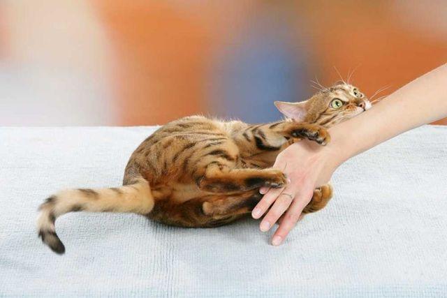 Поцарапала кошка и опухла рука - что делать и как лечить
