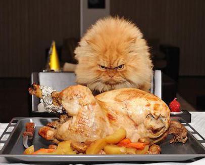 Сколько должна есть кошка в день: главные правила кормления