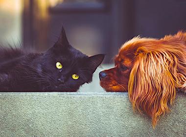 Кто умнее кошки или собаки - сравнение ума