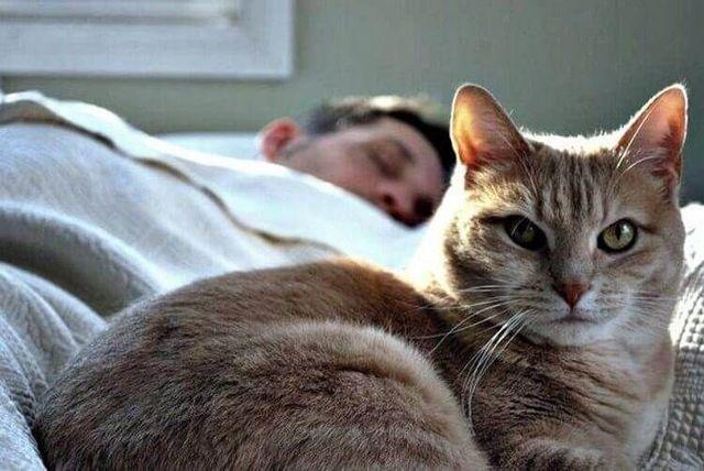 6 причин почему кот спит на спине - что это значит