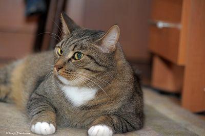 Как приучить уличного кота к лотку в дома