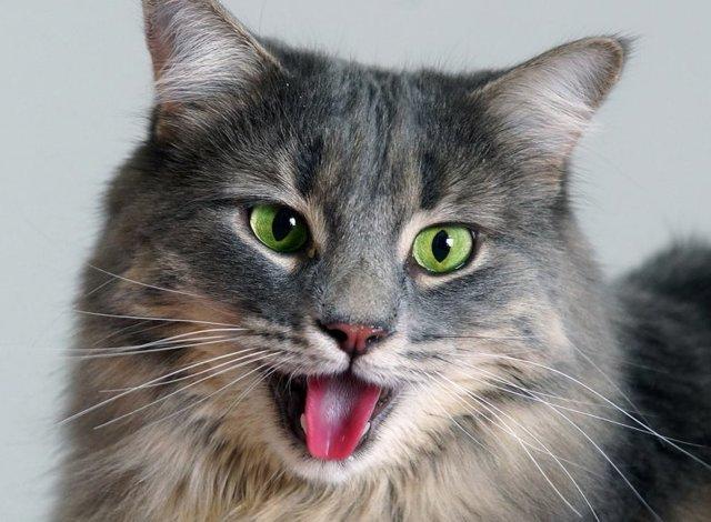 4 причины почему котенок тяжело дышит - что делать