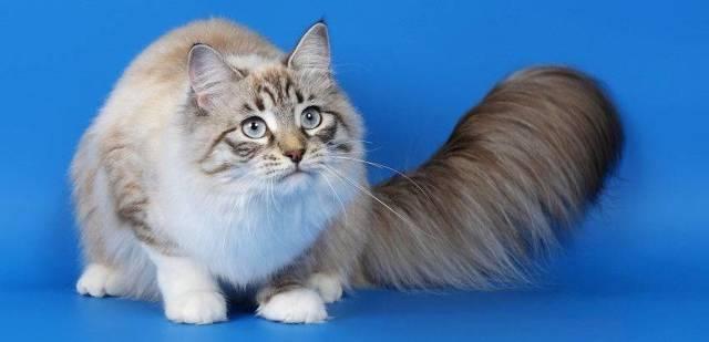 11 причин почему котенка рвет после еды - симптомы и лечение