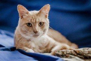 7 причин колита у кошек - симптомы, лечение, виды, профилактика