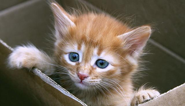 12 причин почему кошка плохо ест