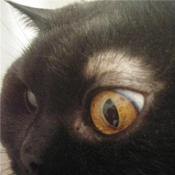 Залысины у кошки над глазами - причины и профилактика