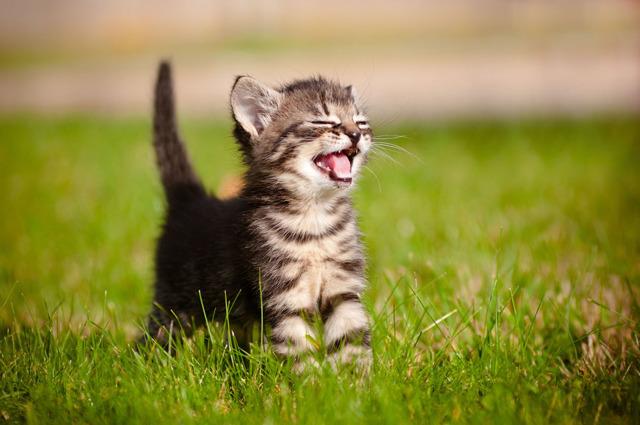 Кошка чихает - причины, лечение и профилактика