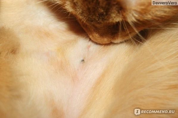 Может ли стерилизованная кошка загулять