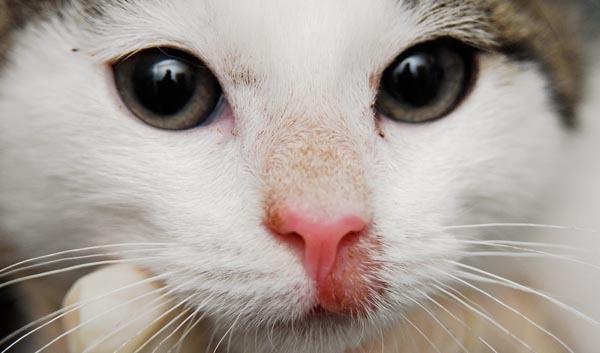 Мазь ЯМ БК для кошек от лишая: инструкция, состав