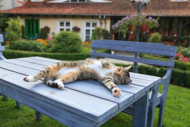 Как отучить котенка лазить на стол - 5 методов