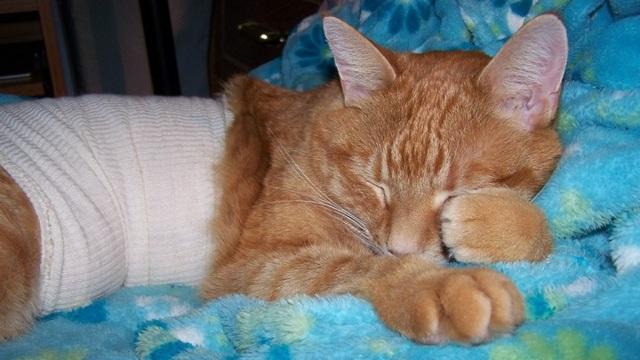 5 причин почему у котенка кровь в кале - диагностика и лечение