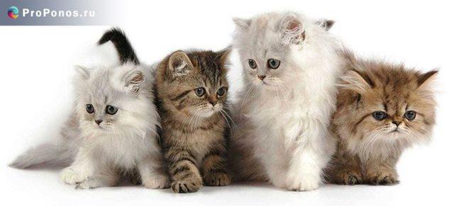 Чем лечить понос у кошек в домашних условиях самому