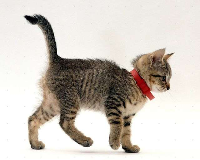 Как вывести блох у котенка 1 месяц - рекомендуемые препараты