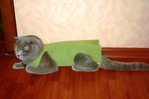 Как завязать попону кошке после операции?