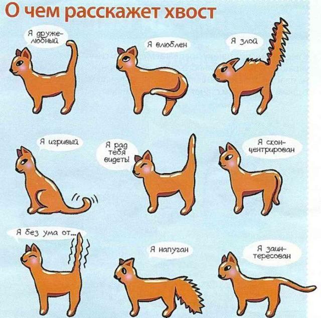 Почему кошка трясет хвостом?