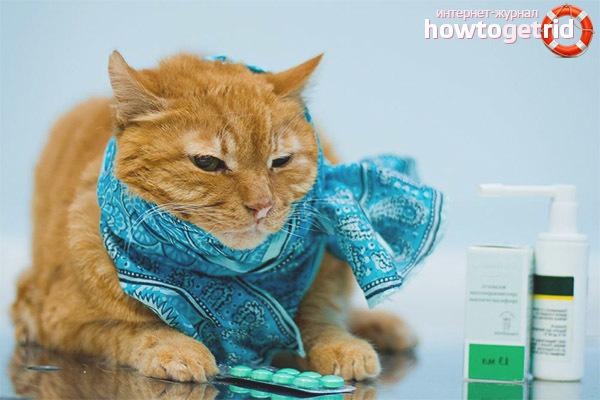 ТОП 7 причин простуды у кота: симптомы и лечение