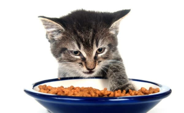 9 причин почему котенок не ест сухой корм - что делать