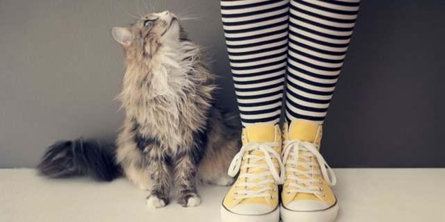8 причин почему у кошки запор у кошки - симптомы и лечение