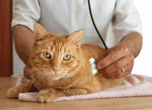 Дюфалайт для кошек - инструкция по применению