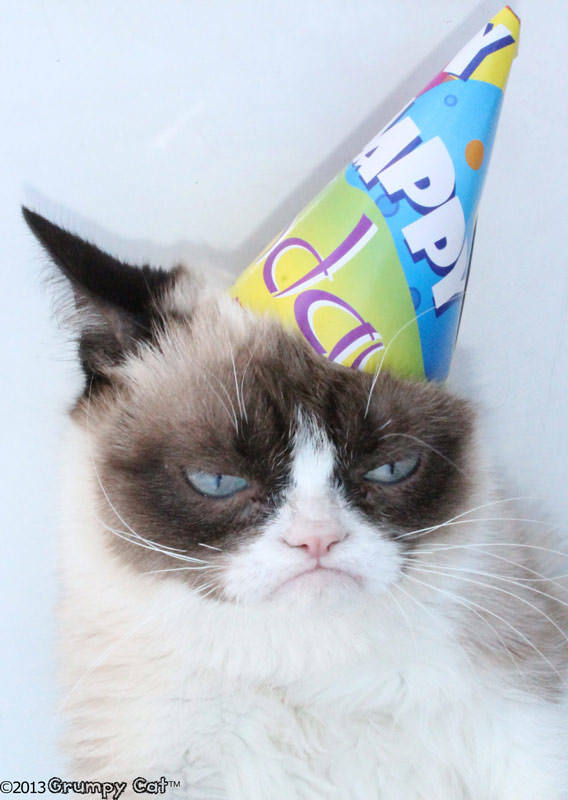 Порода грустного кота - описание и характеристика