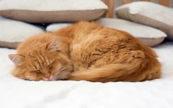 Зеленка для кошки на раны: можно или нет