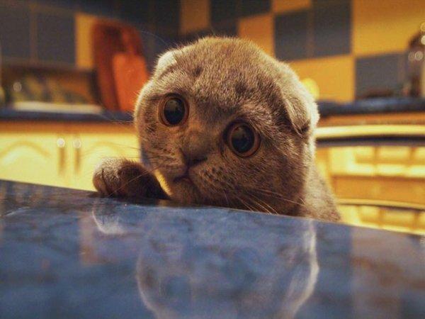 7 причин плохого аппетита у кошки - что делать