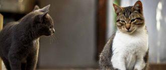 Когда котята начинают ходить в туалет