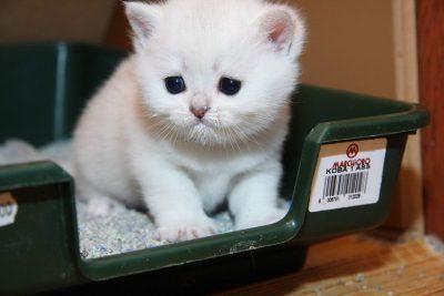 Сколько раз в день должен писать кот - норма в сутки
