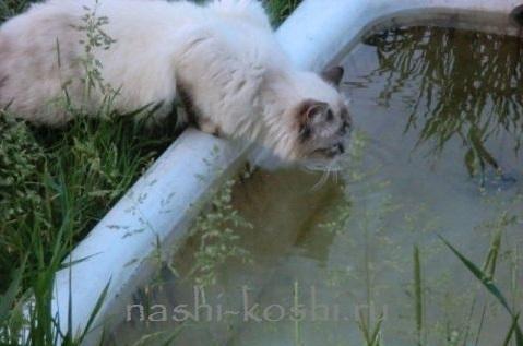 Как заставить кота пить больше воды