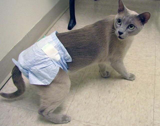 Кошка много писает - причины, симптомы и что делать?