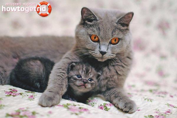 Как подружиться с котом - приручение кошки