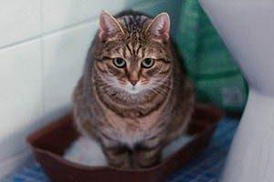 3 причины почему кошка после родов не ходит в туалет