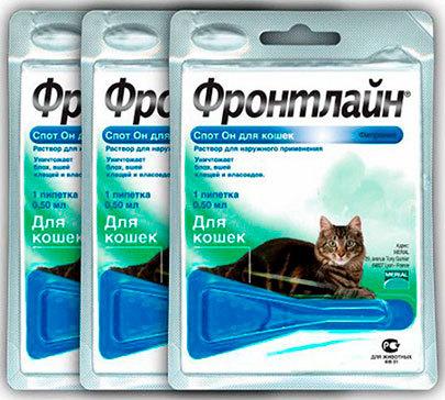 Капли от блох для котят - как применять, преимущества и недостатки