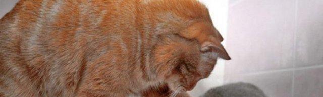 Как кормить кота из шприца - 4 этапы кормления