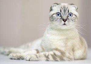 Лоперамид для кошек - дозировка, можно ли давать